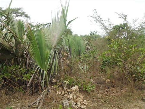 Fenced Land for Sale in Sanyang Center Gambia