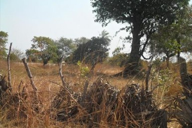 Large Plot of Land for Sale Sanyang Village The Gambia