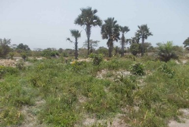 Empty Plots of Land for sale in Sanyang
