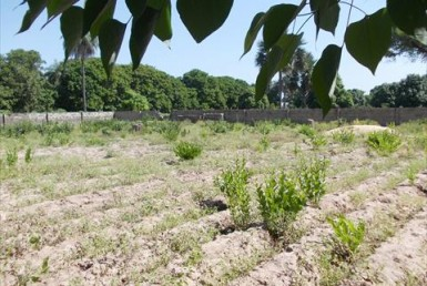 Fenced Land for Sale Sanyang in Gambia