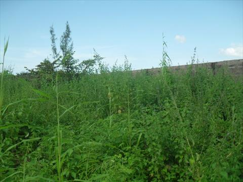 Fenced Plot in Brufut Madiana for sale