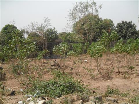 Plot of Land for Sale Batukunku