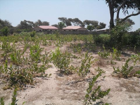 Large Plot of Land for Sale Yarambamba Gambia