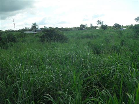 Plot of Land Brufut Madiana for Sale