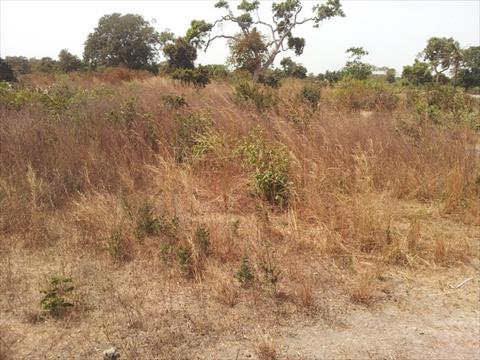 Sanyang Land for Sale Gambia