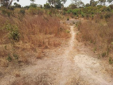 Plot of Land for Sale in Gambia