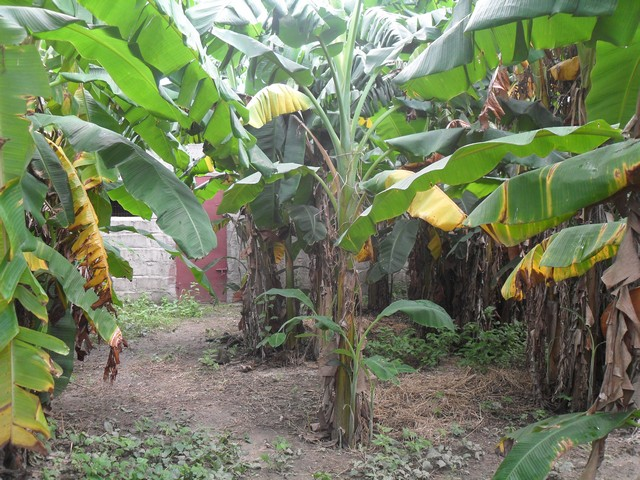 3 bed bungalow for sale in Wullinkama Gambia