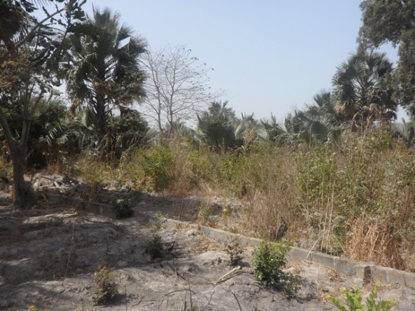 Land for sale Sanyang a