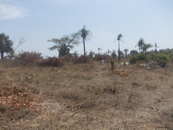 plot of land for sale sanyang a