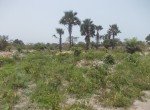 plots of land for sale in sanyang