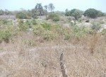 plots of land for sale in sanyang f