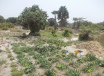 plots of land for sale in sanyang q
