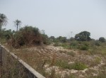 plots of land for sale in sanyang t