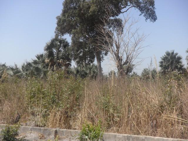 Land for sale Sanyang